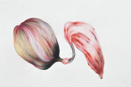 Tatiana Wolska, Lien, 2021, Colored pencil on paper, 30 x 42 cm